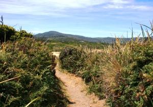Path through scrub at Cloudy Bay